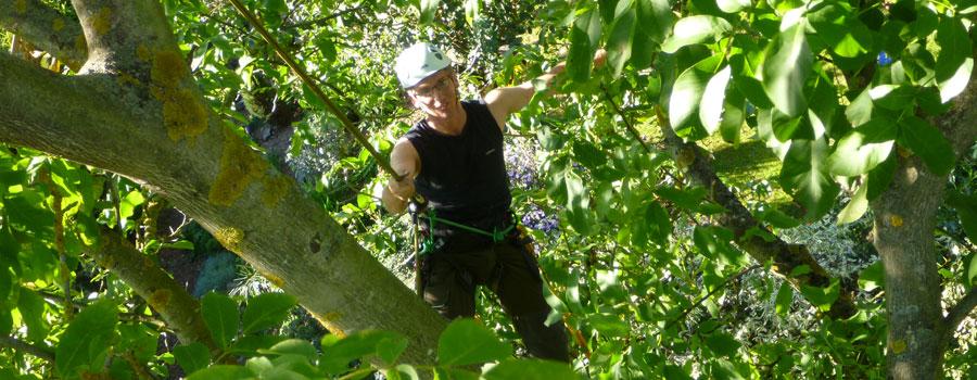Gemeinsame Ihr Fachagrarwirt | Baumpflege und Baumsanierung &OP_34